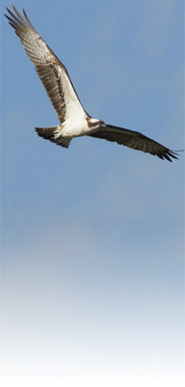 Osprey-Home
